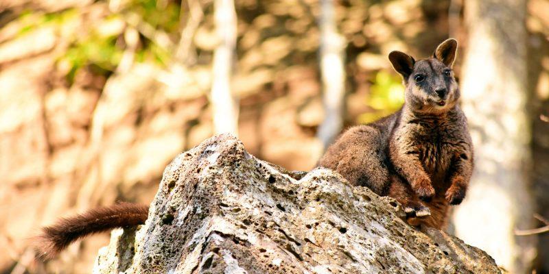 Surviving + thriving threatened species